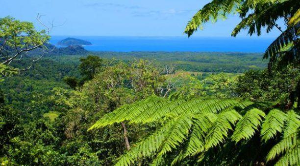 Rainforest to Reef