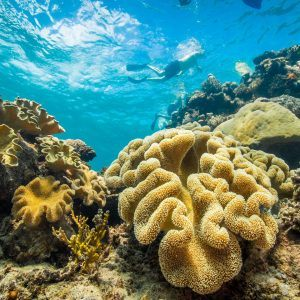 Great Barrier Reef Tour and Tropical Adventure